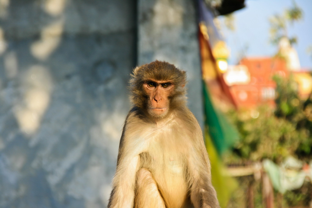 Nepal_2253