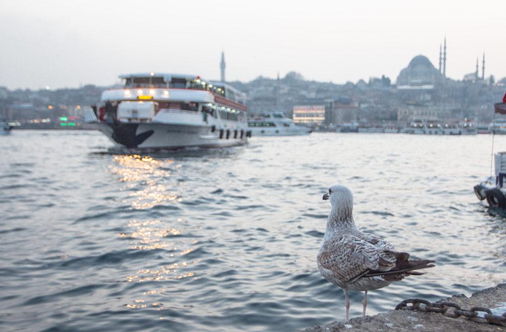 "<img class=""pull-center"" title=""Паромы Стамбула"" src=""https://www.journeys6senses.com/wp-content/uploads/2016/05/IMG_5571-1024x672.jpg"" alt=""Транспорт в Стамбуле"">"