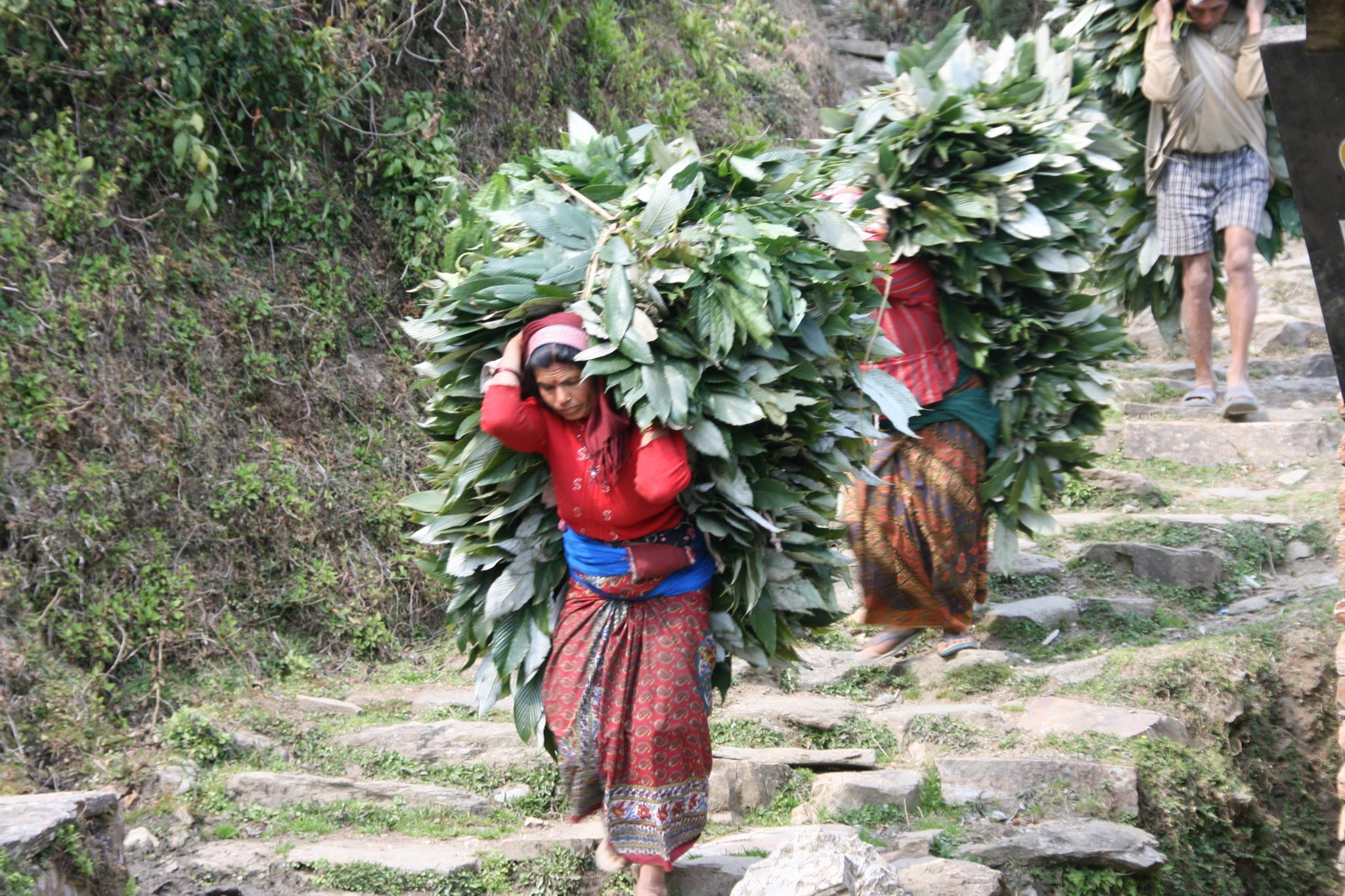 Nepal_0453