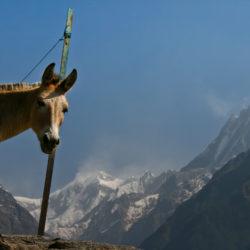 Nepal_0877