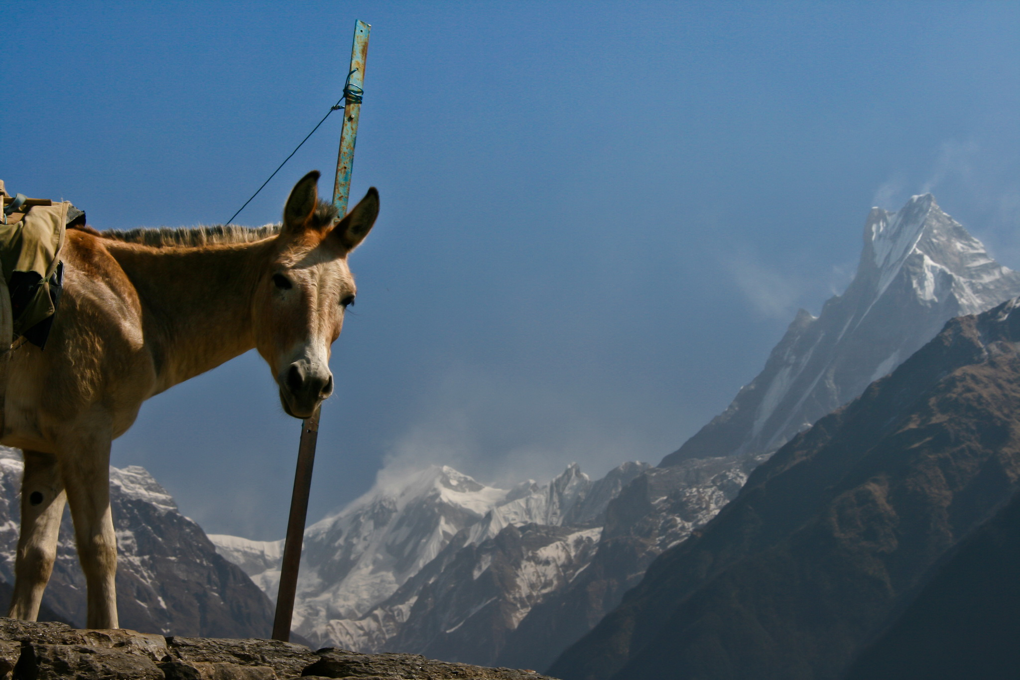 Самостоятельный трекинг в Непале – впечатления и личный опыт