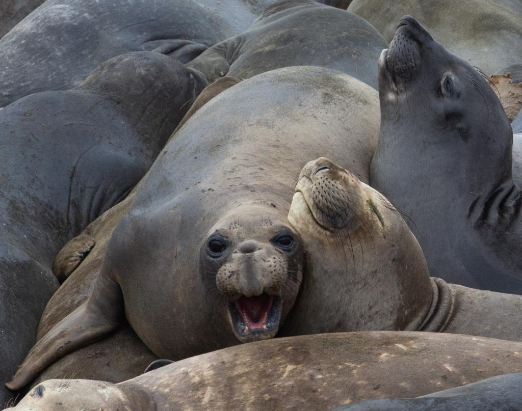 """<img class=""""aligncenter lazy"""" data-src=""""http://www.journeys6senses.com/wp-content/uploads/2020/01/image-12-1024x807.png"""" alt=""""Путешествие по Калифорнии"""" title=""""На фото лежбище морских слонов на пляже Калифорнийского побережья, Калифорния, США"""">"""