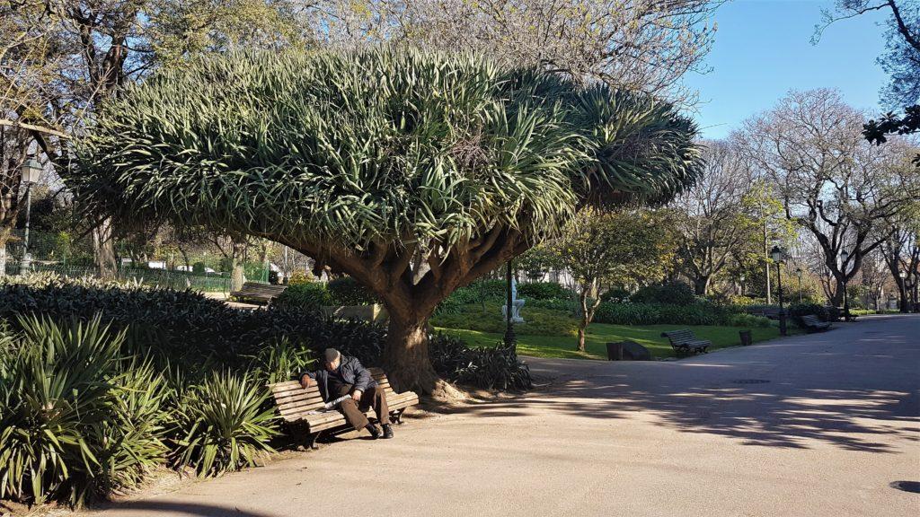 """<img class=""""pull-center"""" title=""""Лиссабон, парк Эштрела"""" src=""""http://www.journeys6senses.com/wp-content/uploads/2020/04/20200224_094811-1024x576.jpg"""" alt=""""парк Эштрела в Лиссабоне"""">"""