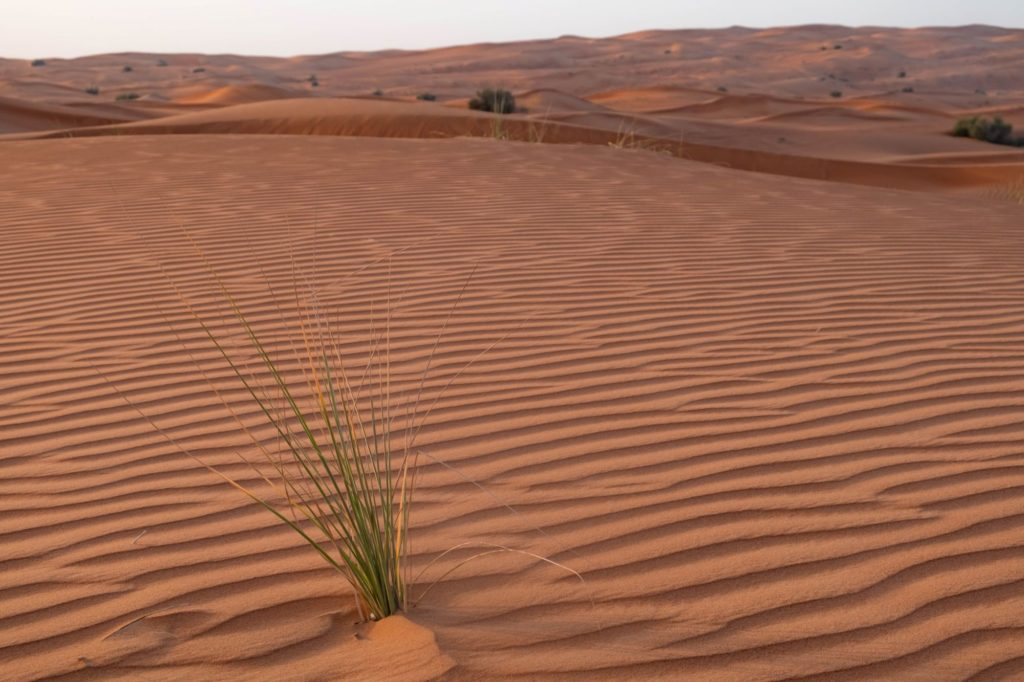 "<img class=""pull-center"" title=""Дубай пустыня"" src=""https://www.journeys6senses.com/wp-content/uploads/2021/02/DSCF9087-1024x682.jpg"" alt=""Чем заняться зимой в Дубае"">"